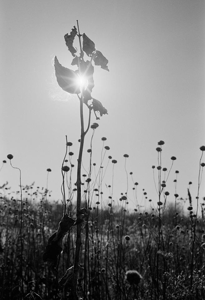 Dancing With Light © Ting-Li Lin